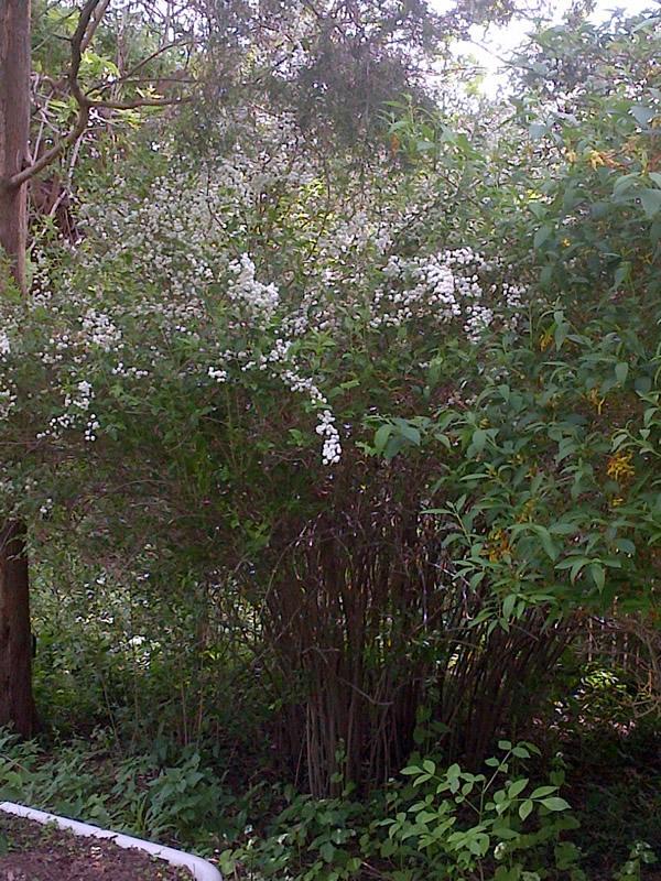 Bottone Family Garden